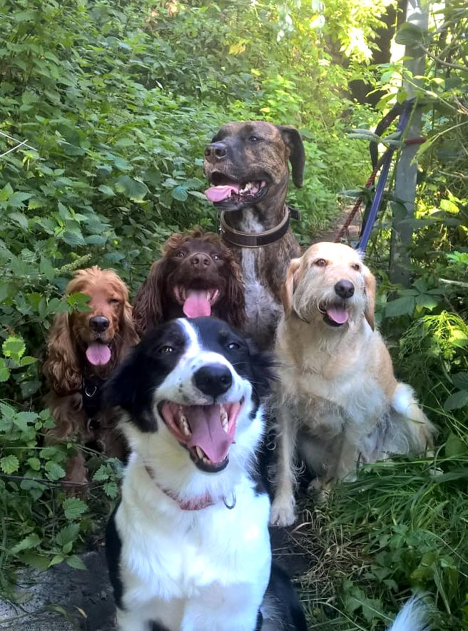 GROUP DOG WALK CHESTER