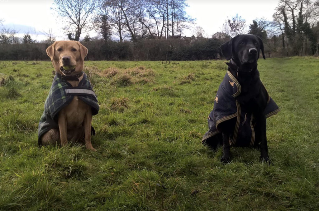 dog walkers chester